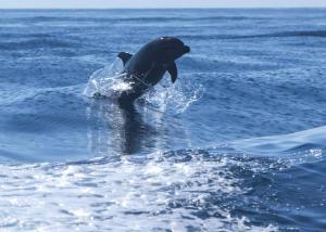 Dolphins in San Carlos